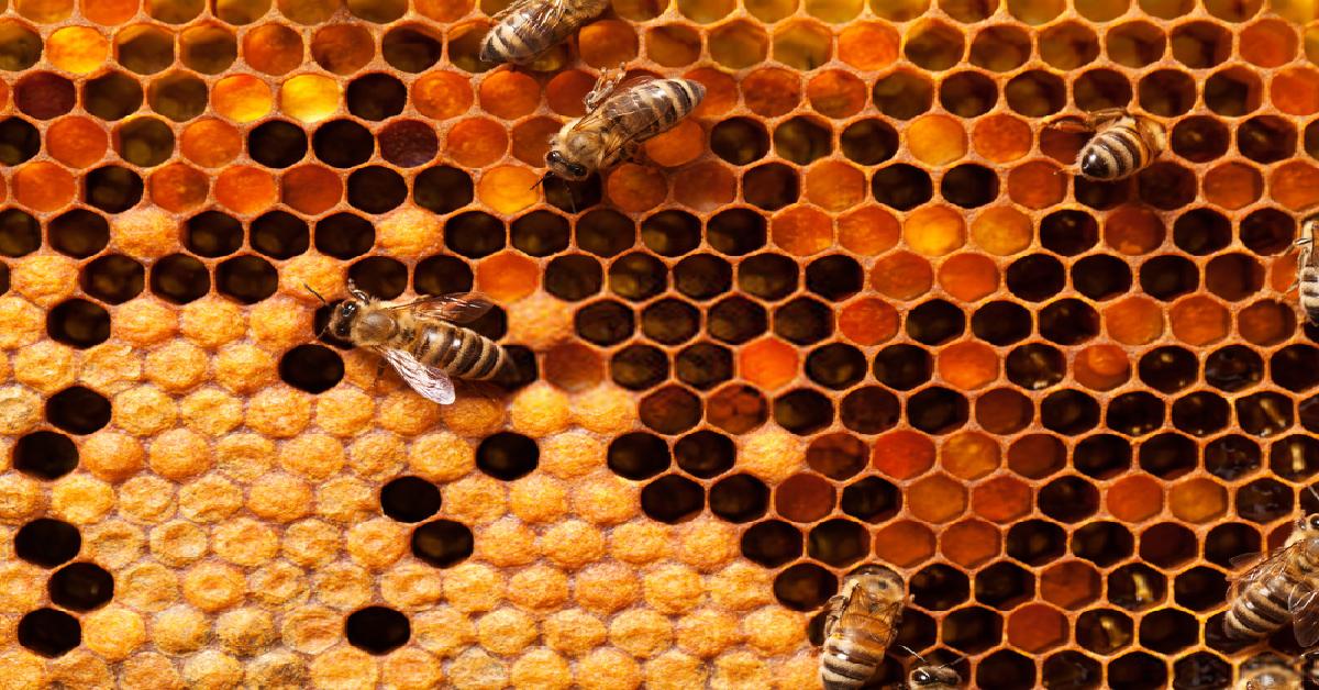 مجلة الصحة السعودية: هل يعتبر عسل حبة البركة الأكثر مبيعًا في السعودية؟